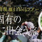 【ハワイ固有の鳥たちに出会う旅】長谷川久美子さんと巡るハワイ島5日間 2019年春参加者募集!