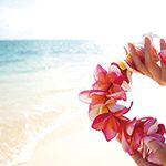 【ハワイの花のある暮らし】プルメリアの冬越し(秋から冬の管理)