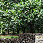 【ハワイの花のある暮らし】バーチャルハワイトリップ・植物園編